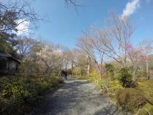 Tenryu-ji Temple in the Bamboo Grove in Arashiyama