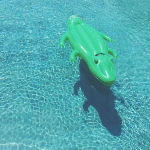 Alligator Float at the Lanna Pool in Ko Samui