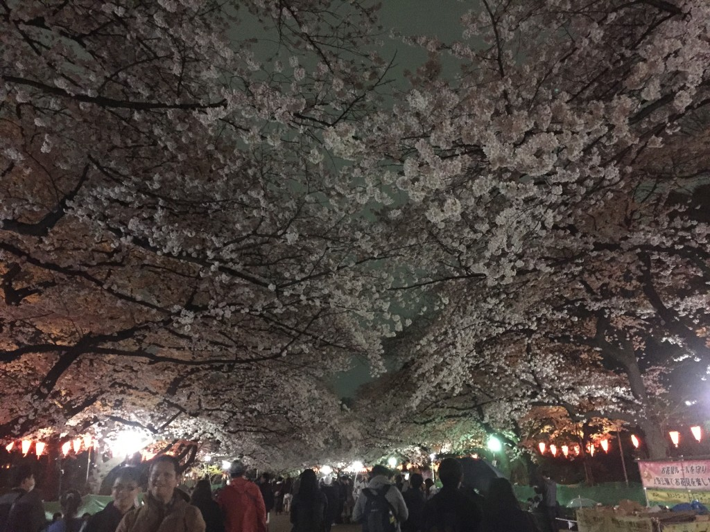 "Ueno Park to check out the Cherry Blossom ""Sakura"" festival"