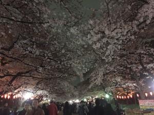 "Ueno Park to check out the Cherry Blossom ""Sakura"" festival"