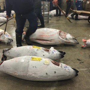 Tsukiji Fish Market Tuna Auction