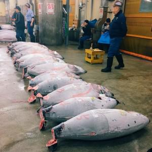 Tsukiji Fish Market Tuna Auction