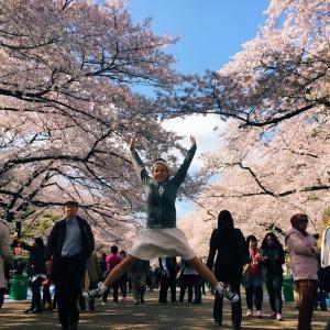 Ueno Park Cherry Blossoms