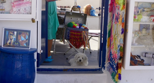 Dog in a Store Front
