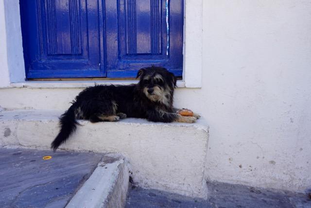 Dog on a step